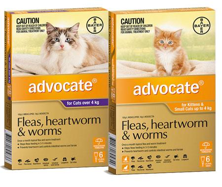 Advocate – Cats