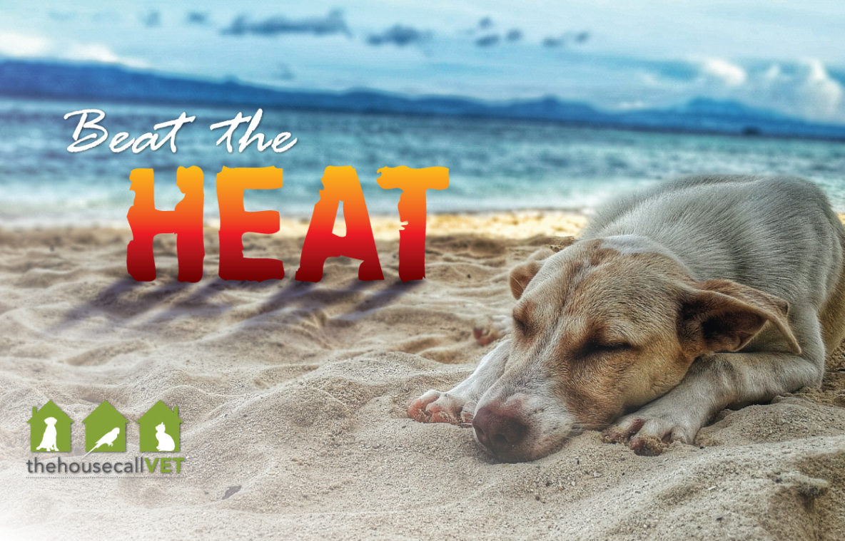 How to beat the heat for dogs, cats and pets