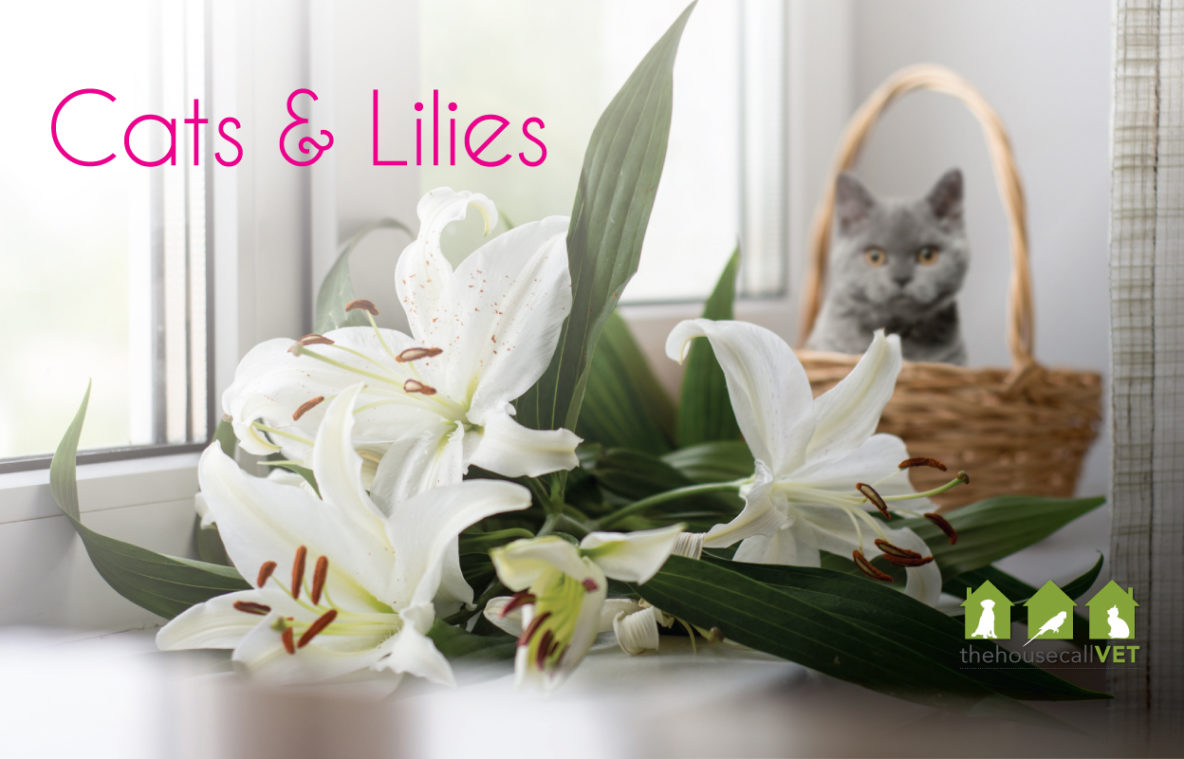 cats and lilies