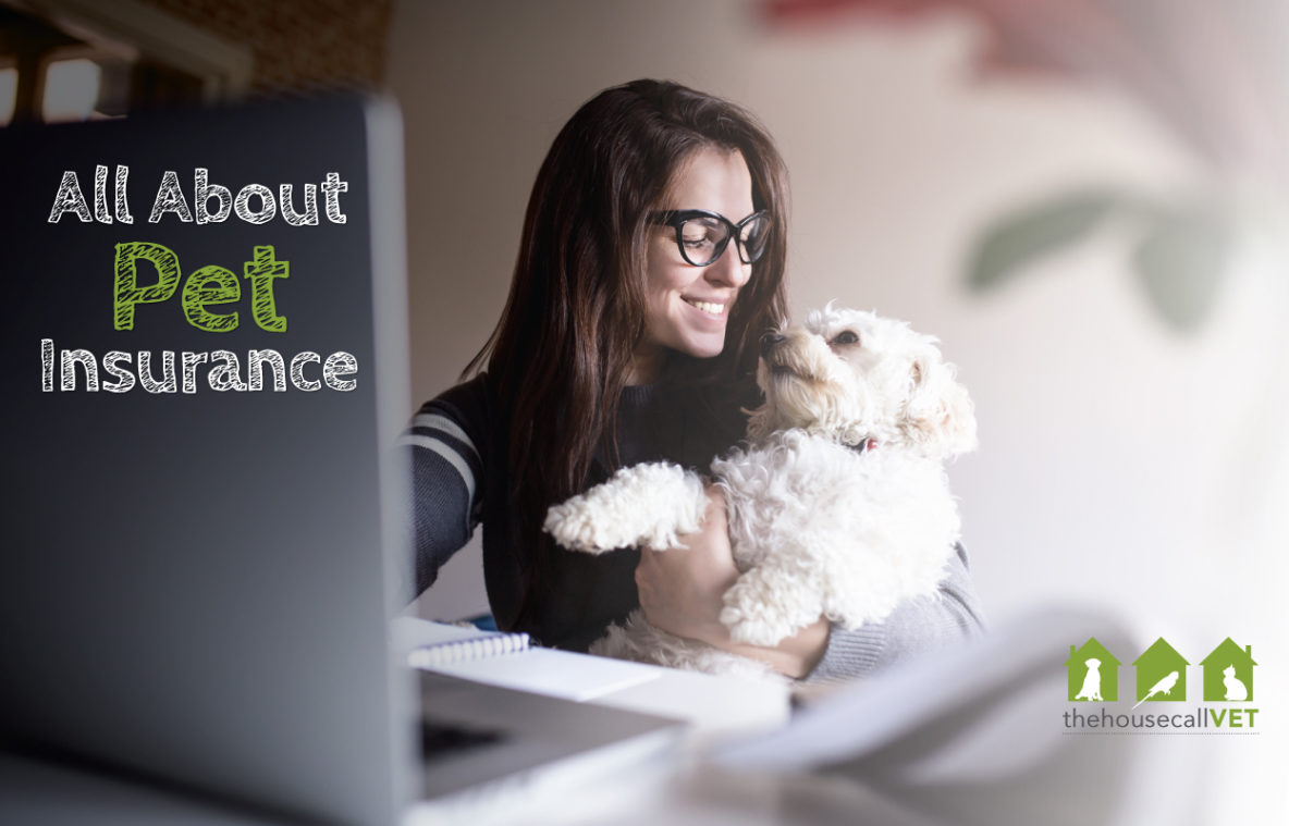 All about pet insurance