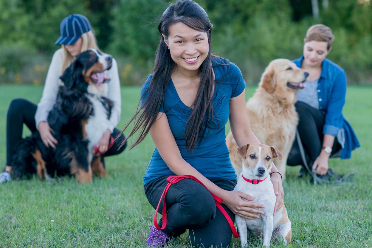 Positive reinforcement, no punishment dogs discipline