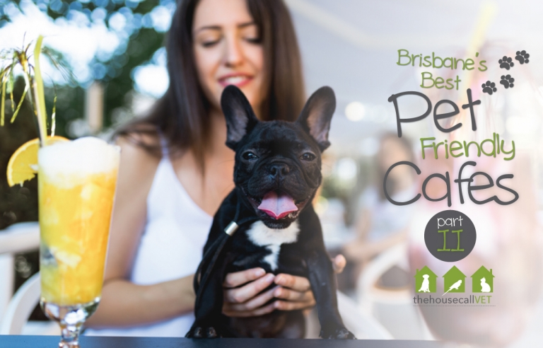 Pet friendly cafes in Brisbane - part 2