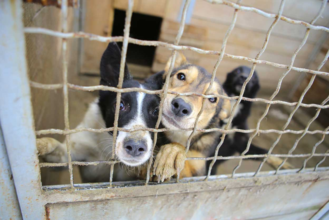 surrendered pets in cage