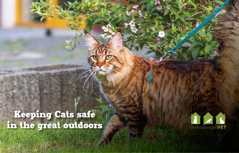 cat walks outdoor thcv