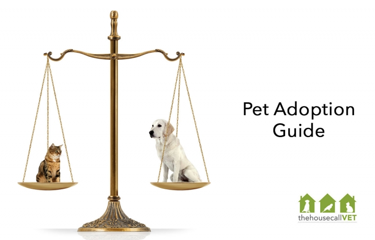 pet adoption guide