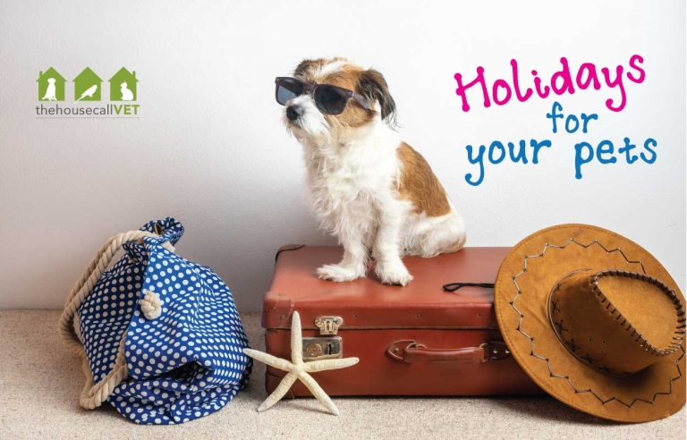 holidays for your pets