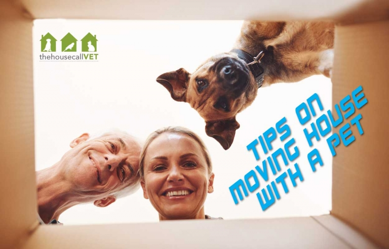 tips for moving house with a pet