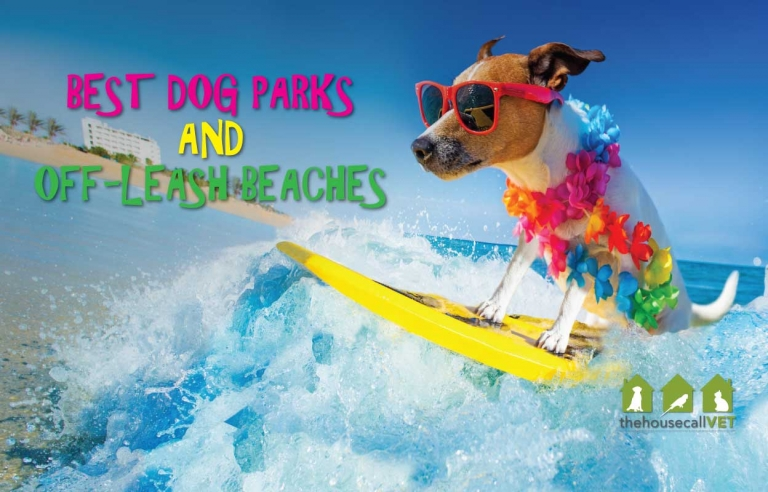 10 best dog parks and off leash beaches